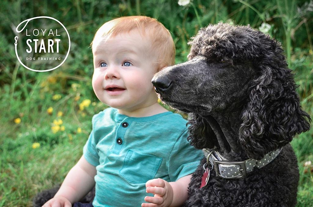 Beloved Pine Branding for Loyal Start Dog Training